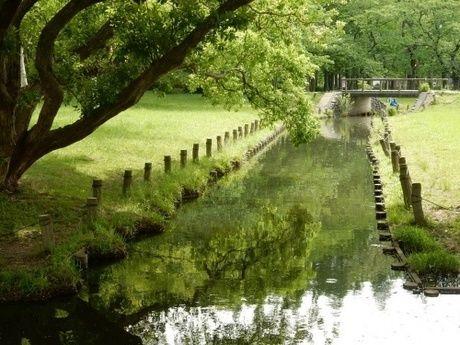 水元公園内にある溜池の写真