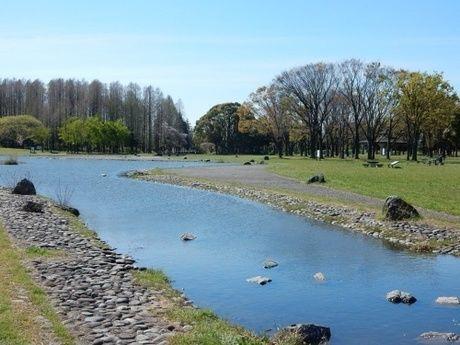 水元公園内に流れている川の写真
