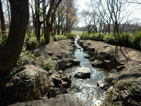 水元公園に流れる小川の写真