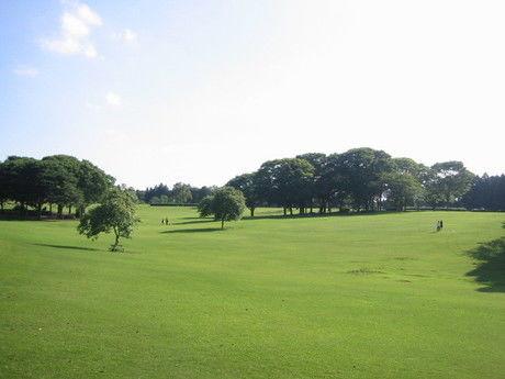 昭和の森の綺麗な草原の写真