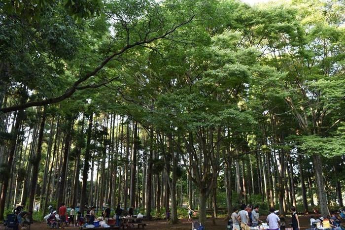 昭和の森フォレストビレッジの森の写真