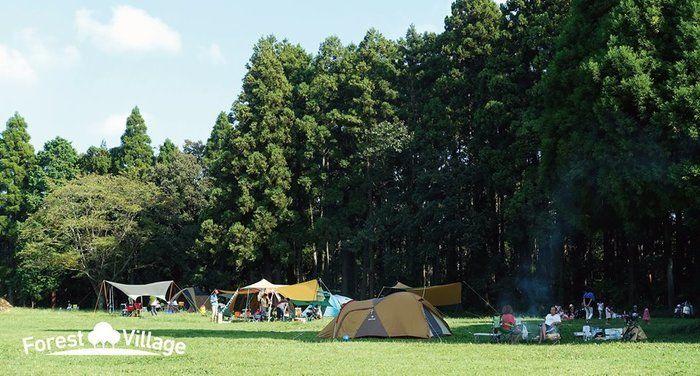 昭和の森フォレストビレッジのテントサイトの写真