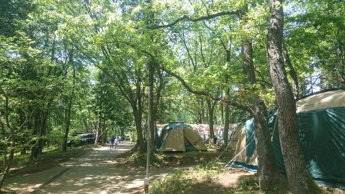 フォンテーヌの森のテントサイトの写真