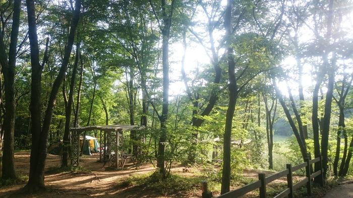 フォンテーヌの森のキャンプ場の写真