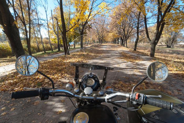 イチョウ並木をバイクに乗っている写真