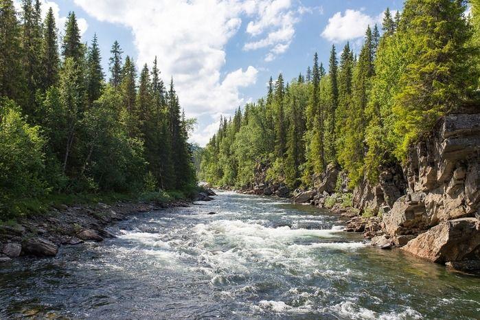 森の中を流れている川の写真