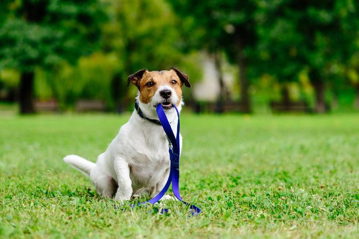 芝生の広場で座っている犬の写真