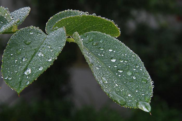 雨の降った葉っぱ