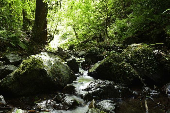 高尾山の小川
