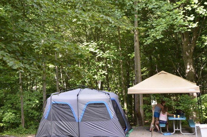 キャンプ場内の様子