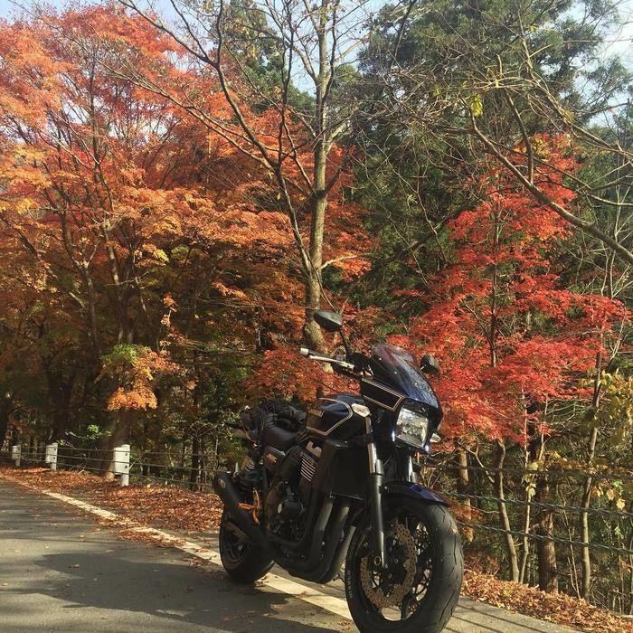 紅葉のとバイク