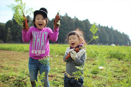 野菜収穫体験を楽しむ子供達の様子