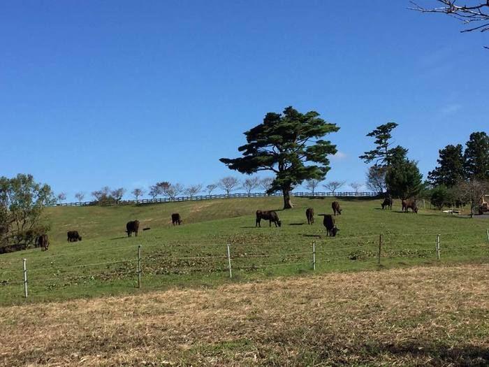 三河高原キャンプ村から見える牧場