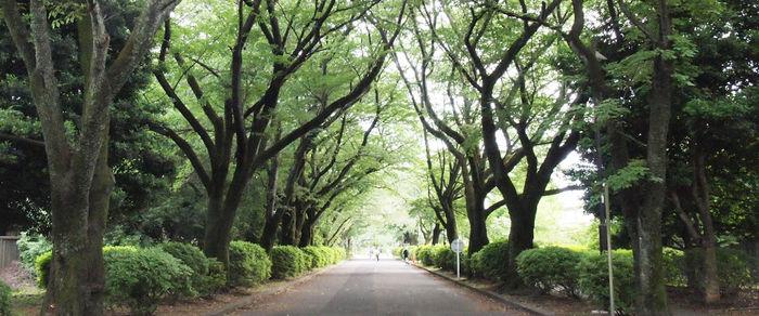 小金井公園の並木道の様子