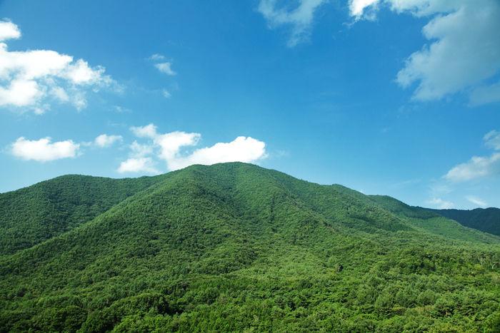 緑豊かな自然がある山