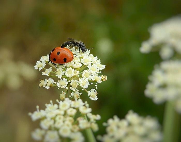花にとまるてんとう虫