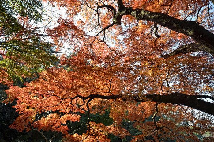 紅葉した秋の木々