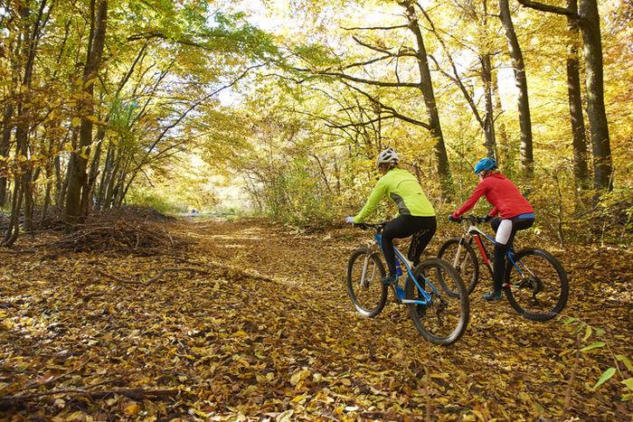 秋の枯葉が落ちている道をサイクリングしている二人の人