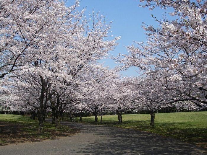 東京都港区の大井ふ頭中央公園