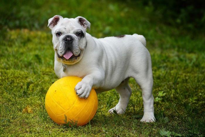 犬がゴールで遊んでいる様子