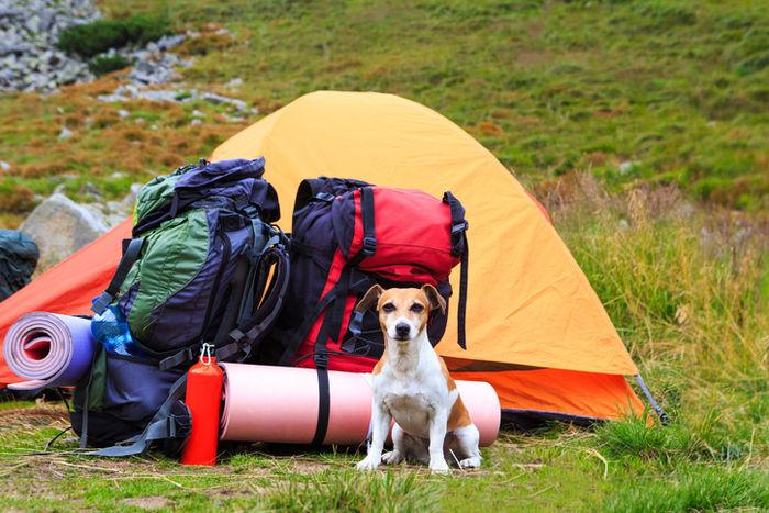 テントの前に座っている犬の写真