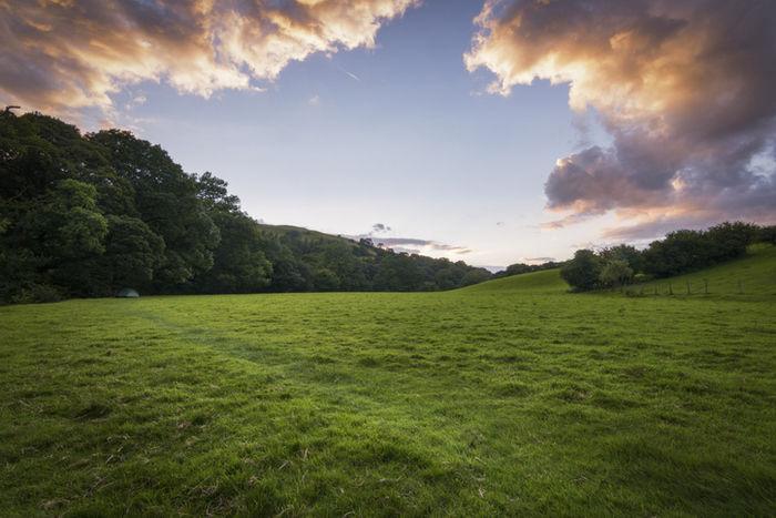 夕日に照らされている草原の写真