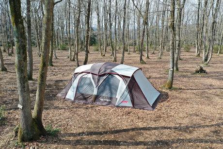 ホウリーウッズ久留里キャンプ村の林間サイト