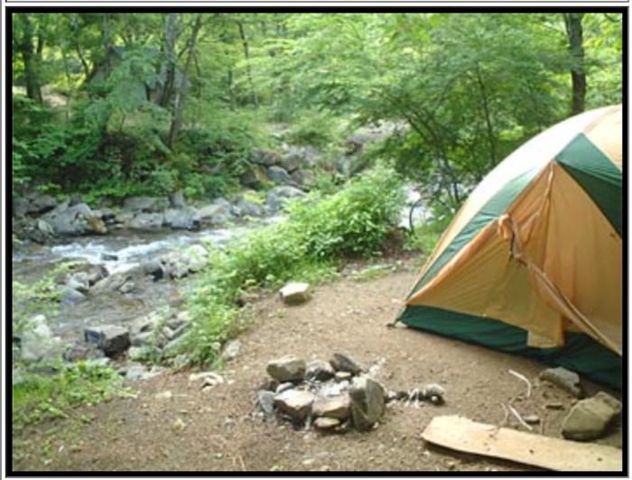 道志の森オートキャンプ場内の様子