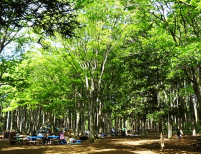 昭和の森フォレストビレッジ場内の様子