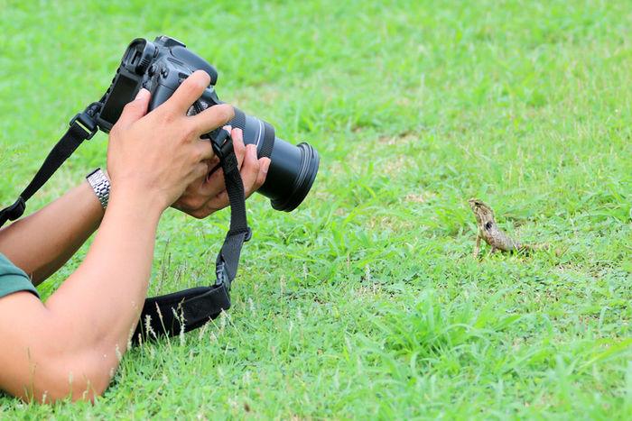 カメラでトカゲの写真をとっている人の写真