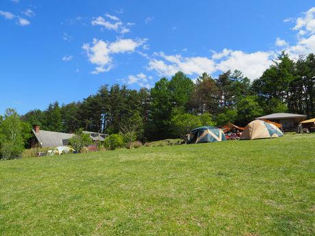 綺麗な芝生のテントサイトの写真