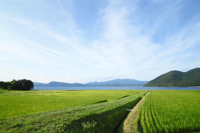 田沢湖の周りにある綺麗な田んぼの写真
