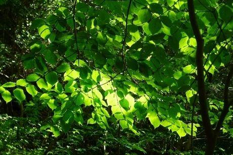 広葉樹の写真