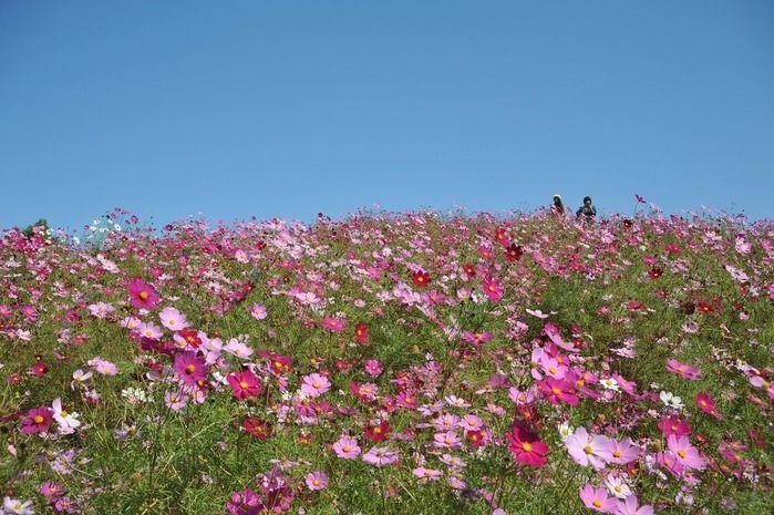 まんのう公園の花