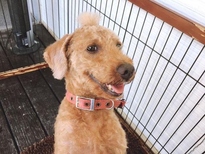 ピクニカ共和国の犬