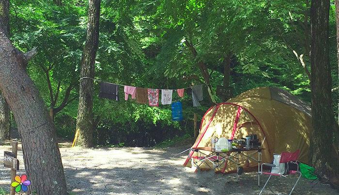 ほうれんぼうの森キャンプ場の様子