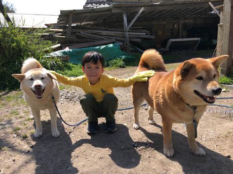 犬と触れ合う男の子