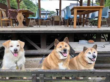 キャンプ場の看板犬3匹
