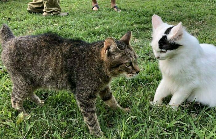 猫のサチちゃん