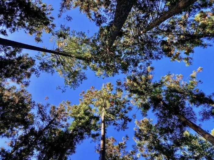 forentaの森林
