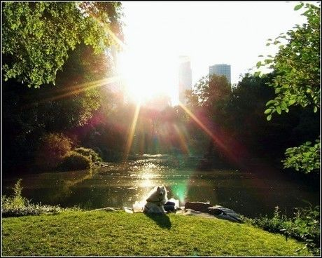 光が差し込んだ池と芝生