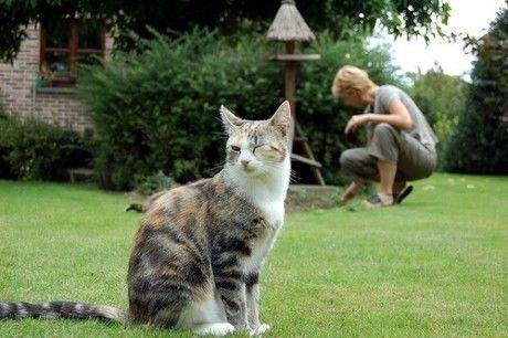 ウインクをしている猫