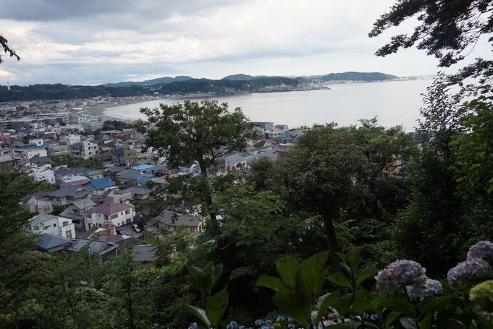長谷寺の紫陽花散策路からの景色