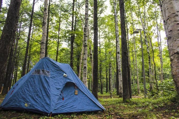 木々の中に建てられたテント