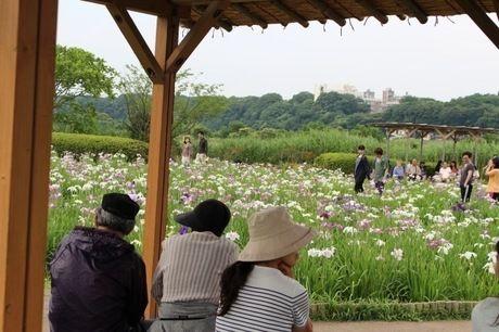 菖蒲をベンチから眺める人々