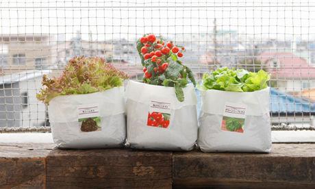 無印良品の野菜栽培キット