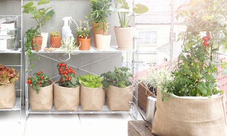 ジュートカバーを被せてインテリアの一部となる野菜栽培キット