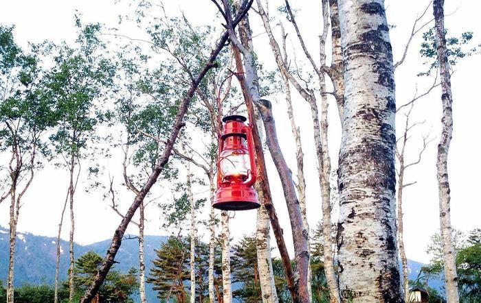 木につるされたハリケーンランタン