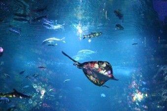 新江ノ島水族館のナイトアクアリウム
