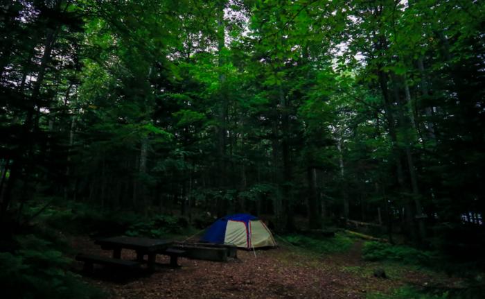 林の中にたたずむテント